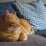 猫の脱走防止対策