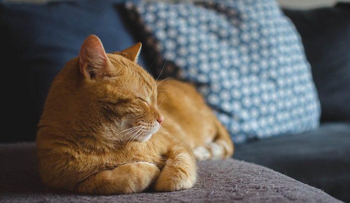 ネコの不思議な習性