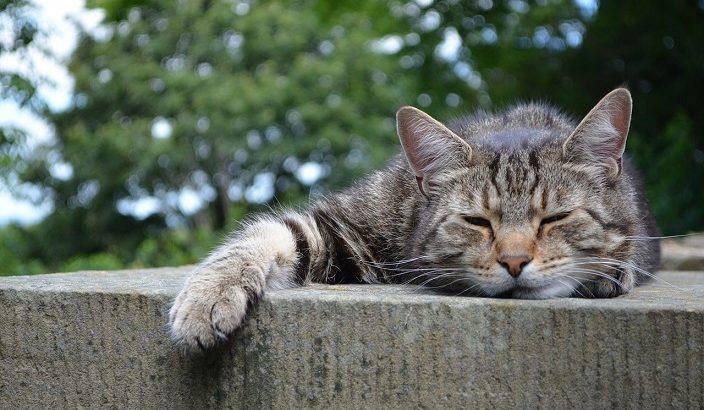 猫の居場所が変わってくると、季節の変わり目を感じる
