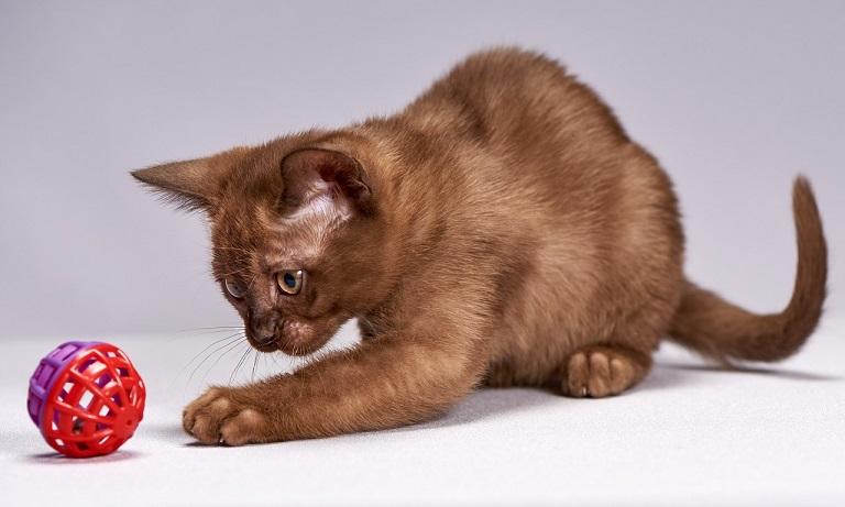 猫,しっぽ