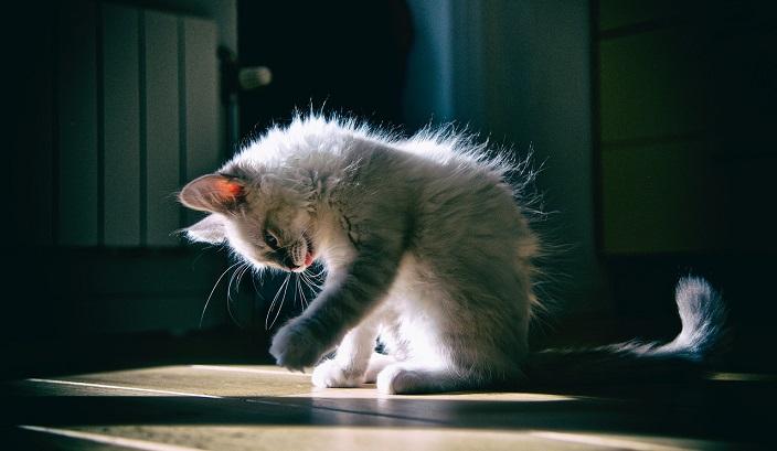 しっぽで分かる猫の気持ち